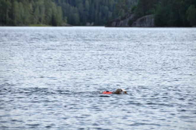 Midas simmar