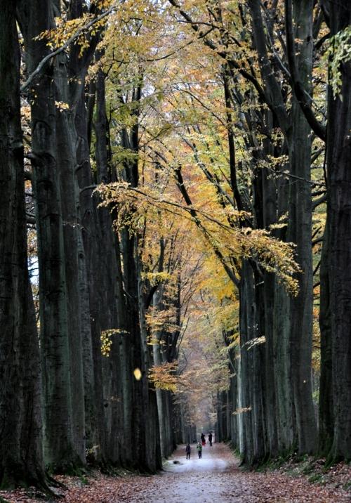 Höst skogen