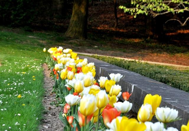 Tervuren tulpaner vår