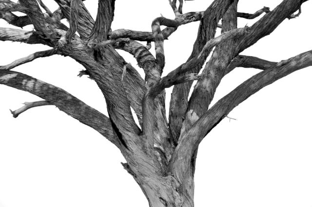 Träd sv